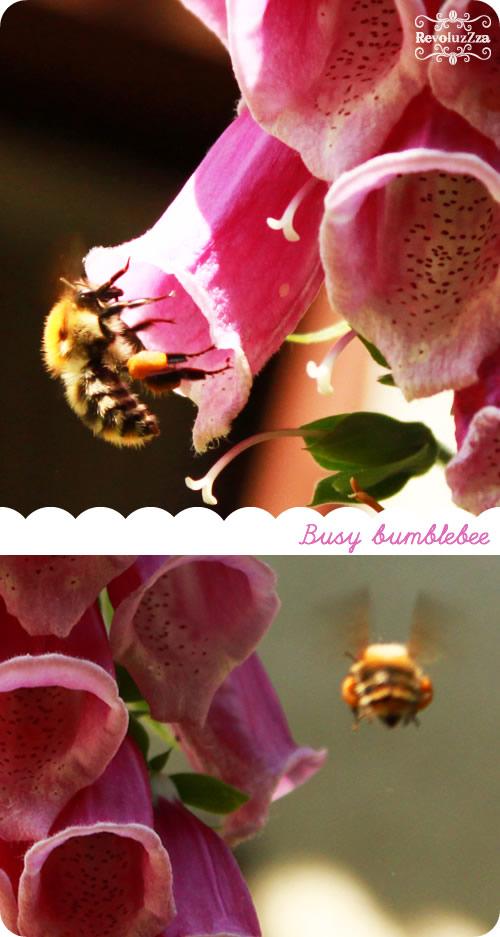bumblebee2013