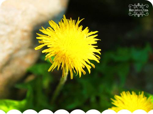 buttercup_blog